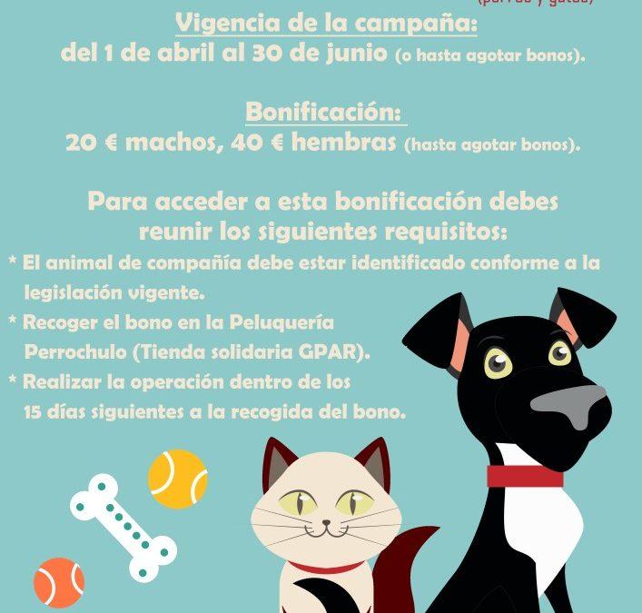 Campaña de esterilización de animales domésticos (2016) 1